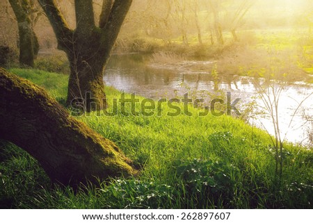 Landscape with  streaming river and grassy shores at sunset - stock photo