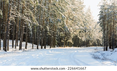 Landscape with the winter forest road - stock photo