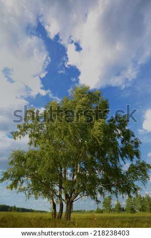 landscape with tree and blue sky in summer - stock photo