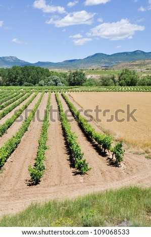 Landscape with vineyards at La Rioja (Spain) - stock photo