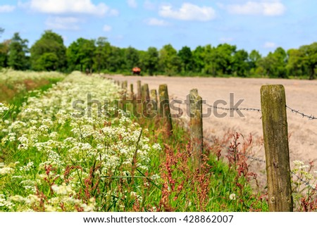 Landscape with weed in spring time in Holland - stock photo