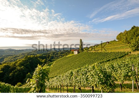 Landscape with wine grapes in the vineyard before harvest, Styria Austria Europe - stock photo