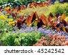 Landscaped flower garden - stock photo