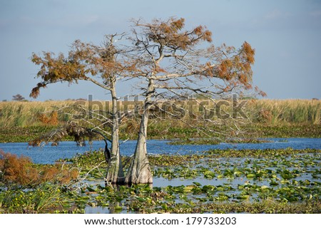 Landscapes in Everglades National Park. - stock photo