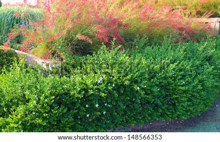 Landscaping in garden - stock photo