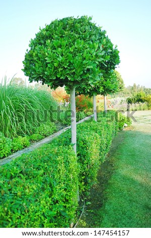 Landscaping in the garden - stock photo