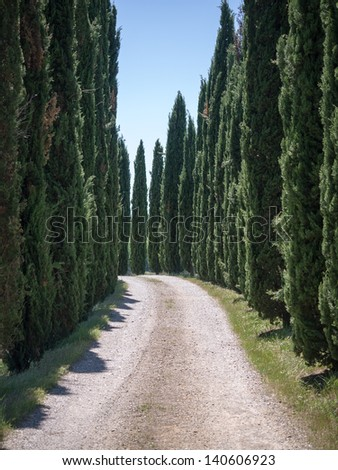 Lane lined with cypresses in the Tuscan province of Siena - stock photo