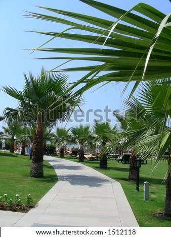 lane of palms in resort - stock photo