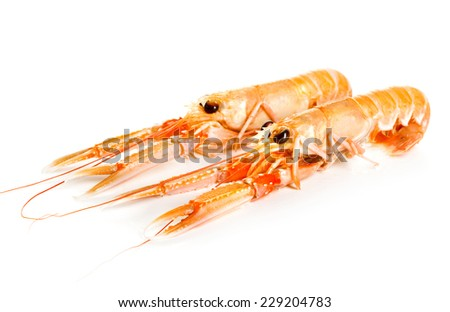 Langoustines on white background - stock photo