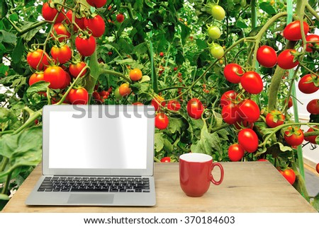 laptop and red mug on wood table with tomato - stock photo