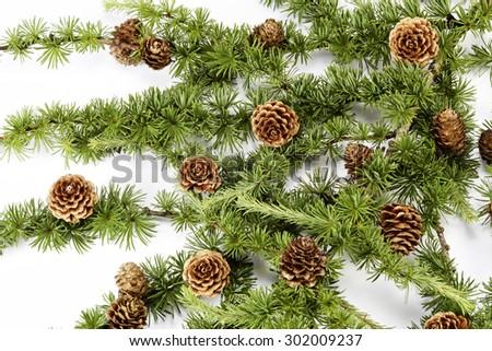 Larch ornament - stock photo