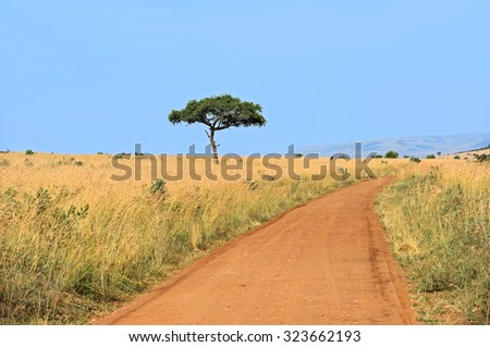 Large Acacia tree in the open savanna plains of East Africa - stock photo