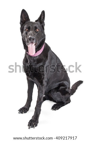 Large black mixed breed dog with tongue out panting - stock photo