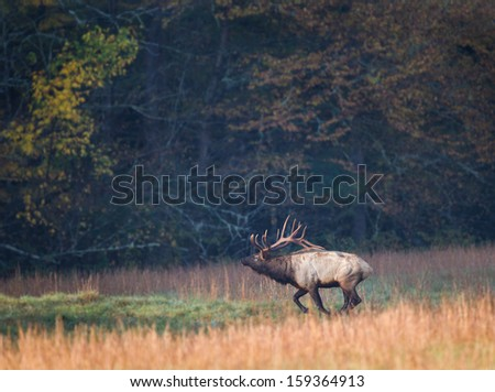 Large buck with full antlers runs in meadow - stock photo