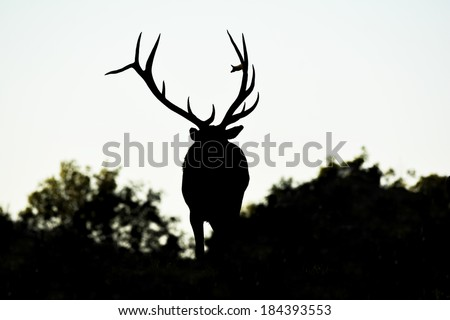 large bull elk silhouette - stock photo