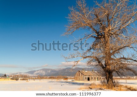 Large, deciduous tree, barn, and mountains on a beautiful winter day in Montana - stock photo