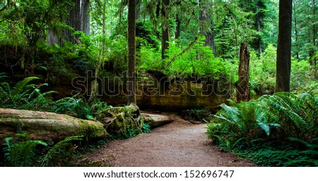Large fallen redwood tree with plant life growing on it - stock photo