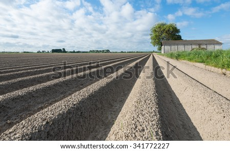 Large field with newly seeded potatoes in ridges and an old barn in the background on a sunny day in the spring season. - stock photo