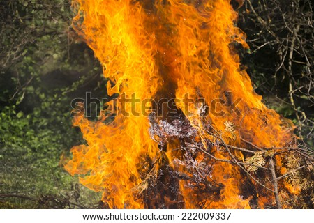Large flames fire burning dry tree branches  - stock photo