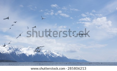 Large flock of herring gulls in Southeast Alaska in spring with mountains in the background. - stock photo