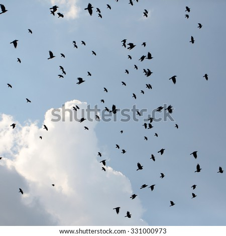 Large gathering of coal-black crows birds silhouettes hovering and croaking high in blue sky with clouds on natural background outdoor in spring, square picture  - stock photo