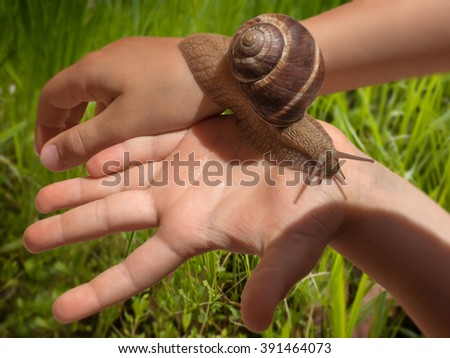 Large grape snail slowly crawling on kid's hands with bright grass field in the background. Toning, soft focus. - stock photo