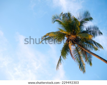 Large green palmtree on a tropical beach over a blue sky - stock photo