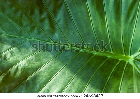 Large green tropical jungle leaf - stock photo