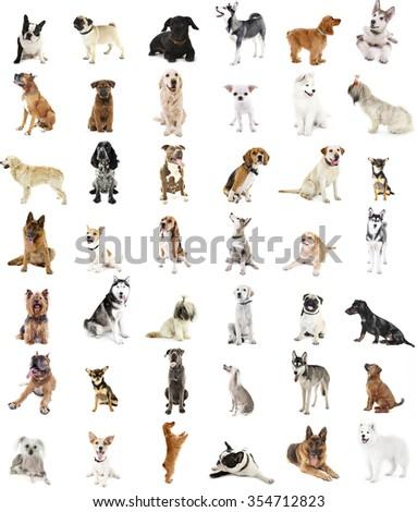 Large group of dog breeds, isolated on white - stock photo