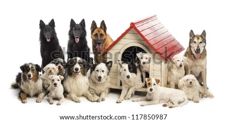 Large group of dogs in and surrounding a kennel against white background - stock photo