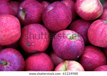 Large group of just picked organic red apples at local farm market - stock photo