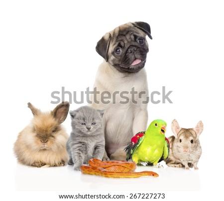 large group of pets along. Isolated on white background - stock photo