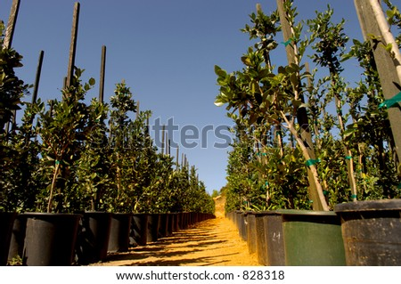 Large growing fields - stock photo