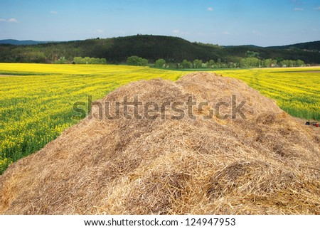 Large heap of hay in the field of yellow blooming rapeseed - stock photo