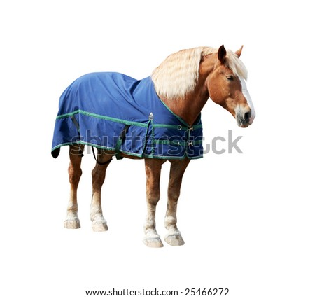 large horse wearing coat with clipping path - stock photo