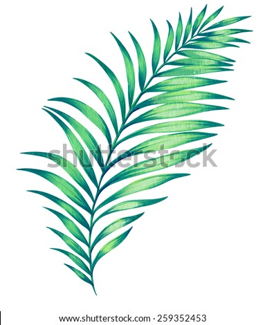 Large illustrated palm leaf.  hand drawn illustration, isolated on white - stock photo