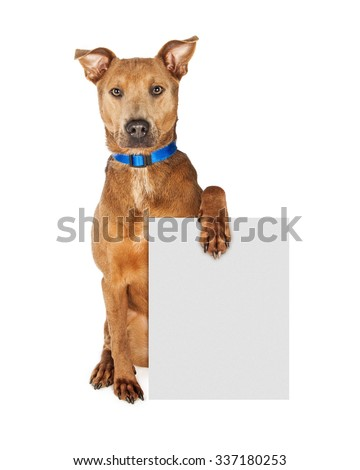 Large mixed breed dog wearing a blue collar sitting and looking forward while holding a blank sign to enter your message onto - stock photo