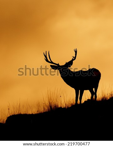 Large Mule Deer Buck stag on ridge top skyline silhouette sunrise / sunset photo with space for text / copy Deer & big game hunting season in the western United States - stock photo