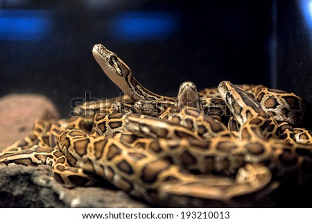 Large pack of young snakes closeup photo - stock photo