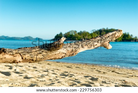 Large Piece of Driftwood Tree Branch on Beach at Port Launay, Seychelles - stock photo