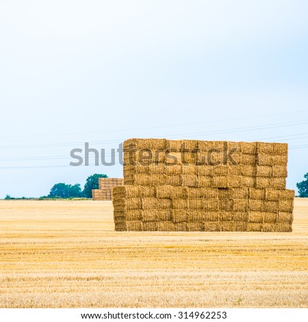 Large Piles of Hay Bales as an Agriculture Farming Symbol of Harvest Time - stock photo