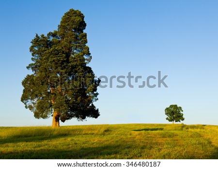 Large pine type tree with another smaller tree on horizon line in meadow or field to illustrate concept of big and small or parent and child - stock photo