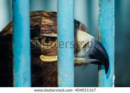 large portrait of a hawk who sits in a cage. - stock photo