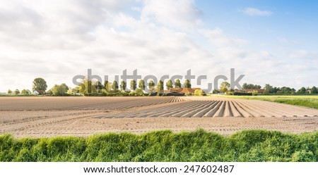 Large potato field with ridges just after planting the seed potatoes in the spring season. - stock photo
