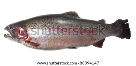 Large rainbow trout (Oncorhynchus mykiss) isolated on white background - stock photo