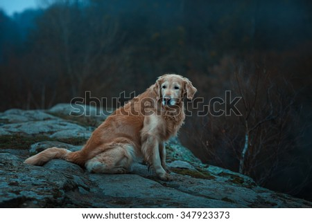 Large red and sad dog.  It is on the edge of a precipice. - stock photo