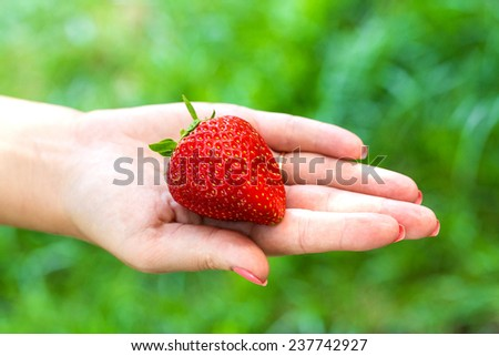 large Ripe red strawberries in hands - stock photo