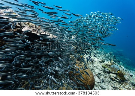 Large school of fish on coral reef - stock photo