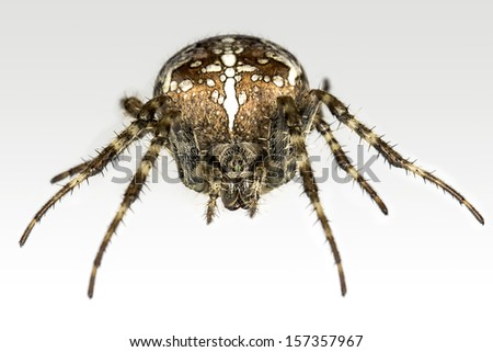 Large spider on white - stock photo