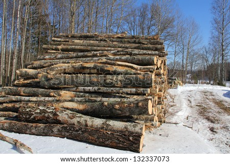 Large stack of birch logs by forest road on a bright day in winter. - stock photo